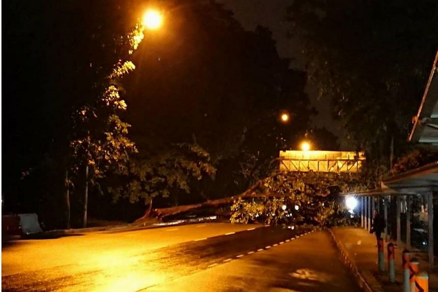 Photos posted on social media show the tree lying across at least three lanes, with buses backed up in front of it.