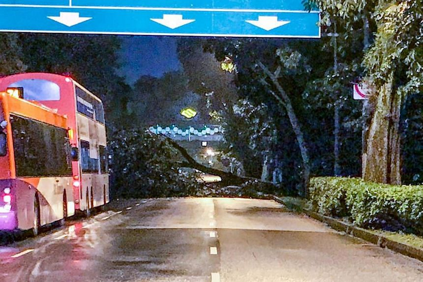 The tree fell across Dunearn Road in the direction of the city.