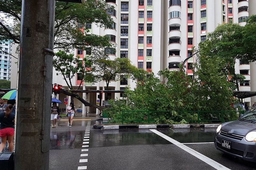 The large tree branch fell across the road at the junction opposite Sun Plaza mall in Sembawang.