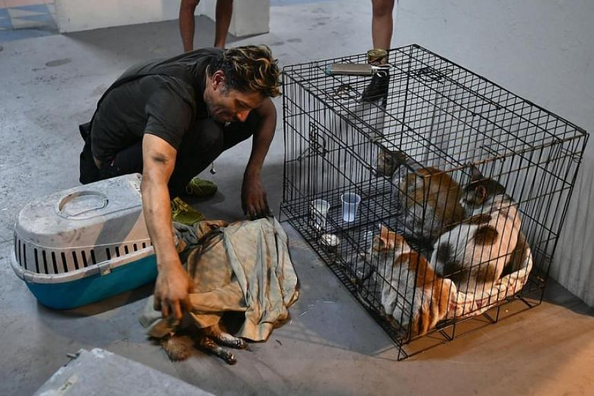 Mr Armand Rafi with his cats after the fire.