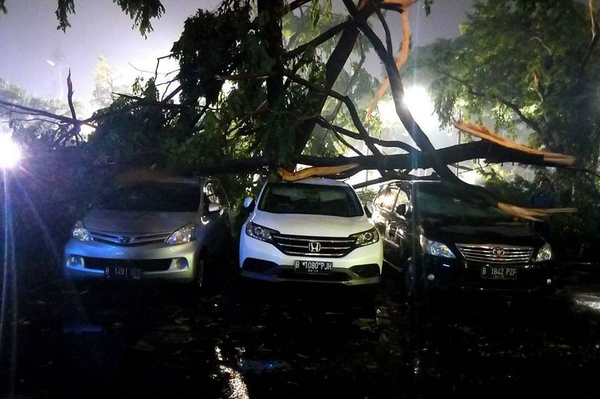 A fallen tree crushes cars in Senayan, Central Jakarta, in this file photo.