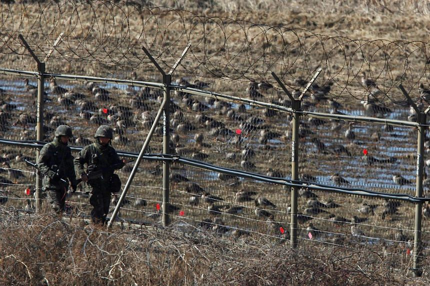 South Korean soldiers walk past birds as they patrol along a barbed-wire fence near the demilitarized zone (DMZ) separating the North and South Korea.