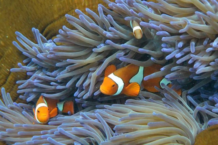 Fish swimming through the coral on Australia's Great Barrier Reef on Sept 22, 2014.