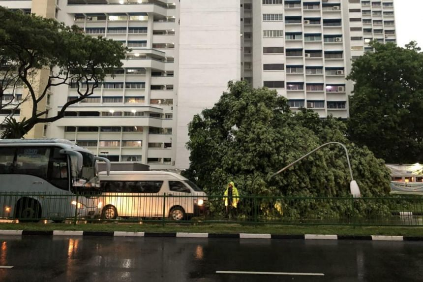 The fallen tree left the lane passable only to smaller vehicles.