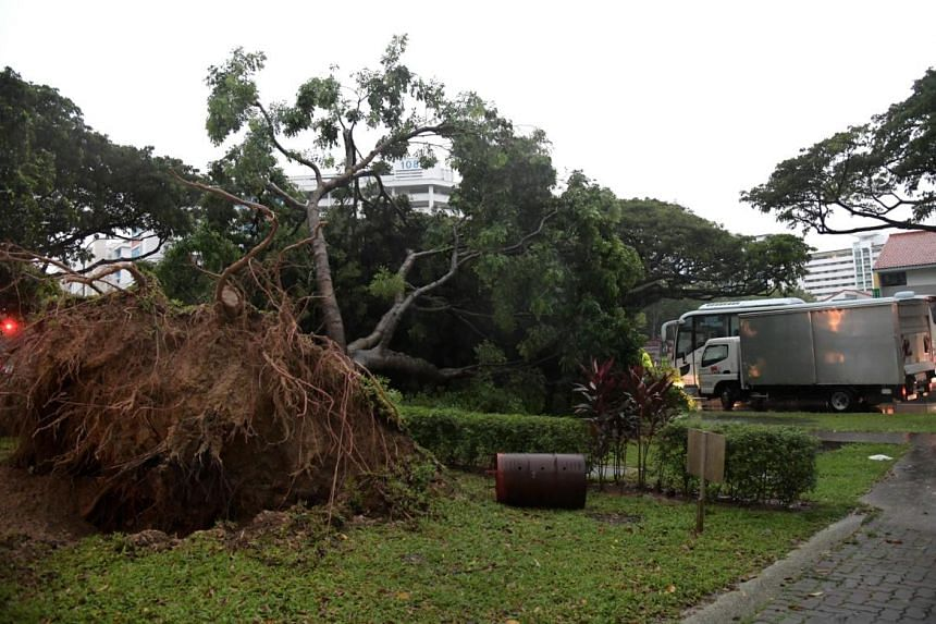 A tree fell near Geylang Polyclinic this morning, leading to a traffic jam.