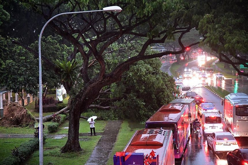 Heavy rain early yesterday morning caused a tree (left) to fall near Geylang Polyclinic, toppling a lamp post and causing a traffic jam in the direction of Sims Avenue. Only the rightmost lane was passable to traffic. A fallen tree was also reported