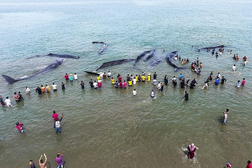 Four sperm whales stranded on a beach in Indonesia have died, a local official said yesterday, despite frantic efforts to save the massive mammals. They were among a pod of 10 spotted by locals stranded along Ujong Krueng beach in Aceh province on Mo