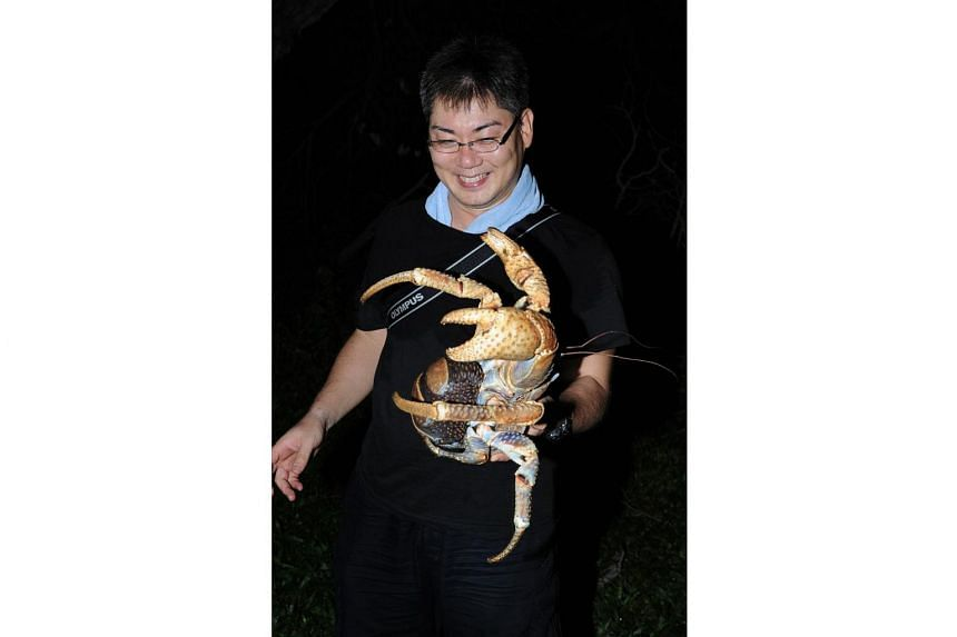 Crab researcher, Dr Yoshihisa Fujita, holding a coconut crab during an expedition to Christmas Island in 2010.