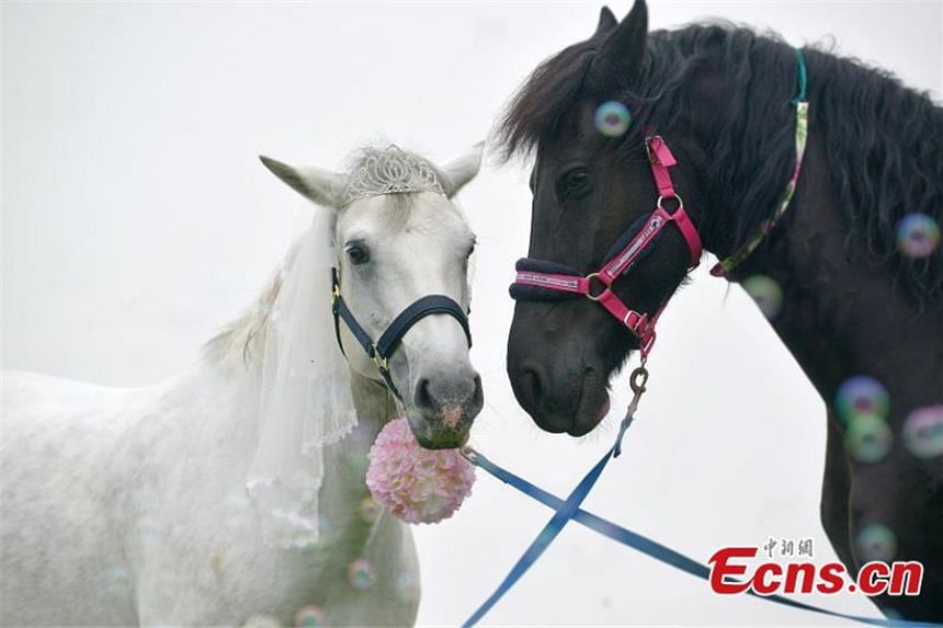 """Photos of a """"horse couple"""" in Chengdu, Sichuan province, recently went viral online."""