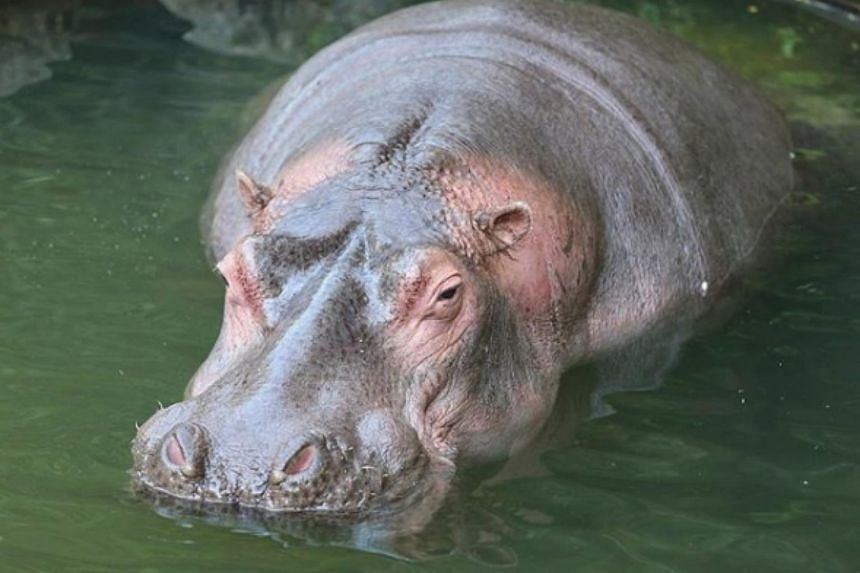Animal welfare activists lambasted the two, known on Instagram as @philipbiondi and @alyccaaa, for giving a hippopotamus and a deer red wine at Taman Safari Indonesia.