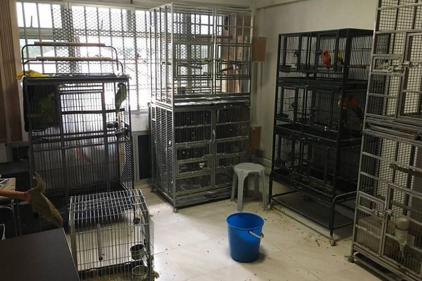 Twenty-seven caged parrots were found in Tan Lai Hock's HDB flat in Jurong West.