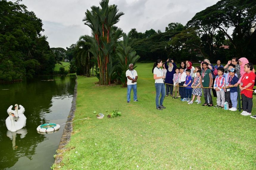 The children also learnt more about the pair of mute swans which the late Mr and Mrs Lee Kuan Yew would visit and feed during their evening walks.