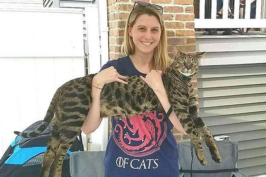 The world's tallest domestic cat has gone missing, and its owners are offering a US$25,000 (S$34,000) reward in bitcoins for its return. Arcturus, a spotted Savannah measuring 48.4cm high, was recognised by the Guinness World Records this year. But t