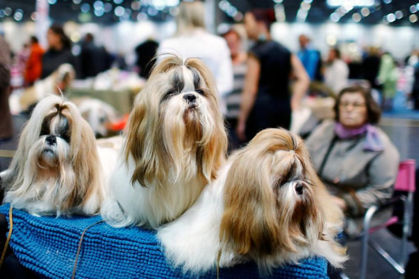 People in possession of a pooch were less likely to have cardiovascular disease or die from any cause during the 12 years covered by the study, according to the study published in Scientific Reports.