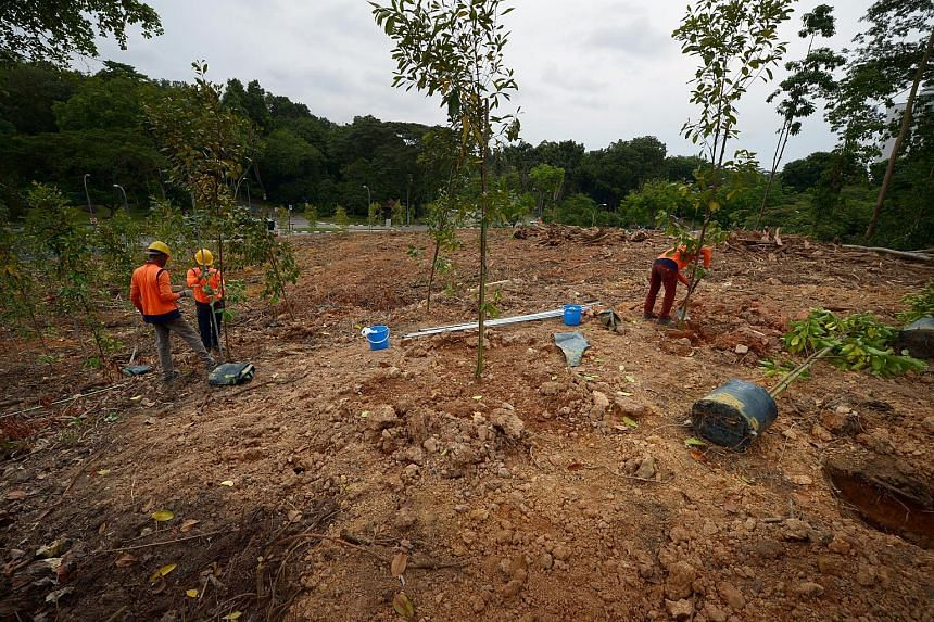 Workers planting saplings outside the Church of Saint Mary of the Angels, opposite Bukit Batok Nature Park, on Oct 30, 2017.