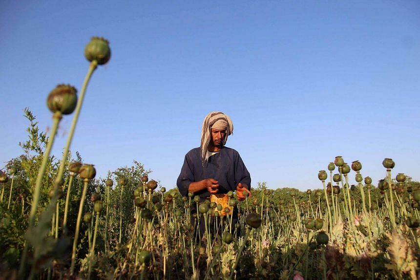 Opium production in Afghanistan is a key source of funding for the Taleban's 16-year insurgency.