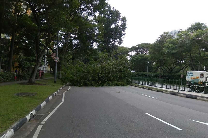 A massive fallen tree branch blocked traffic on two lanes of Lower Delta Road, causing an hour-long closure for traffic along one direction of the road.
