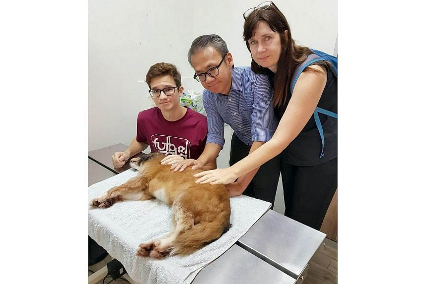 Ludo, the heathy 8-year-old dog owned by Serangoon Central resident Ms Natasha Wilkins.