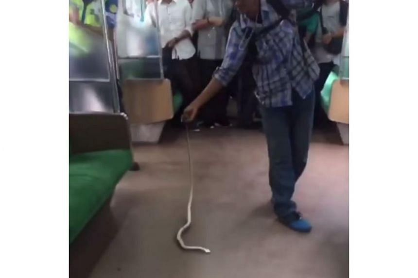 Smartphone footage, which quickly went viral, showed the man casually snatch the snake's tail and then smash its head on the floor in a violent whipping motion.