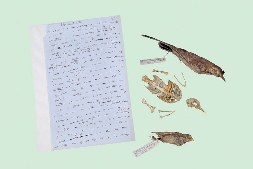 A page from Charles Darwin's On The Origin Of Species, with a finch, a mockingbird and a pigeon skeleton that he studied when formulating his theory.