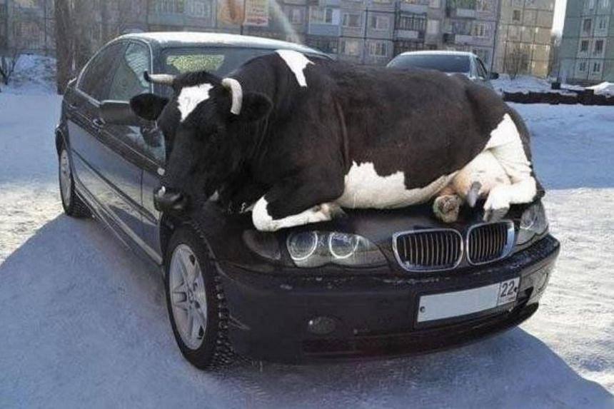 The message from Kansas policeman Ben Gardner was that animals seek warm cars during winter's cold.