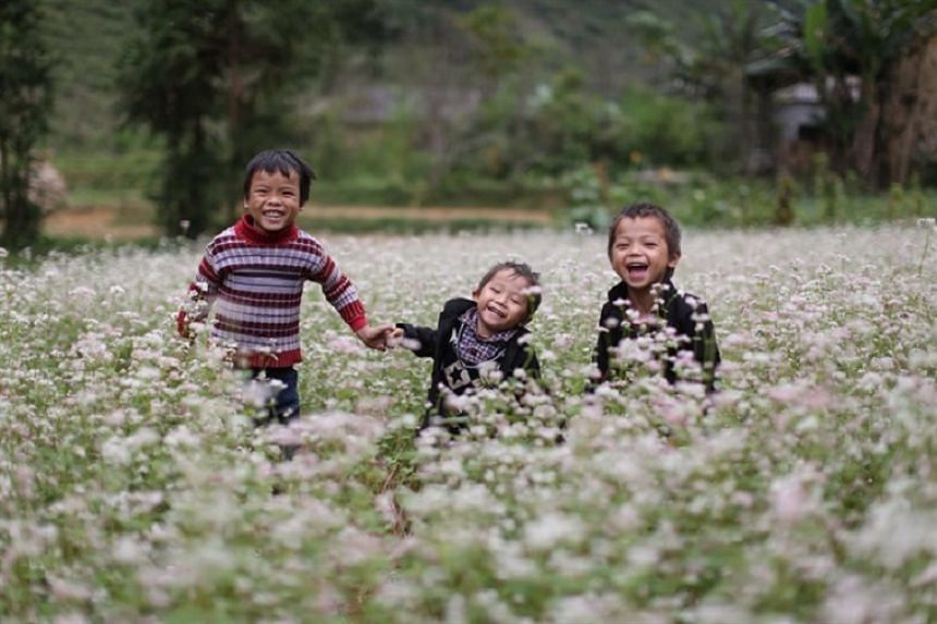 Beautiful fields of buckwheat flowers in Ha Giang Province have become a tourist attraction in recent years.