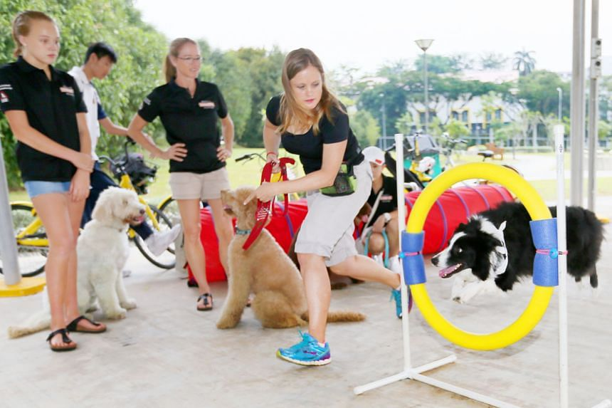 Ms Barbara Wright, 44, taking her dog Ace through an obstacle with fellow volunteers Julia, 13, and Susanne Westerbeek, 49.