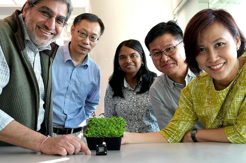(From left) Principal investigator Rajeev Ram and team members Yin Zhongchao, Sarojam Rajani, Jang In-Cheol and Azlinda Anwar are working on sensors that can monitor plants to grow healthier, leafier crops.