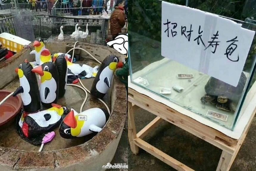 """Photos going viral on China's Twitter-like site Sina Weibo show scenes at the zoo, including a shot of six inflatable penguins in an """"enclosure"""" and a """"longevity tortoise"""" that supposedly invites luck."""