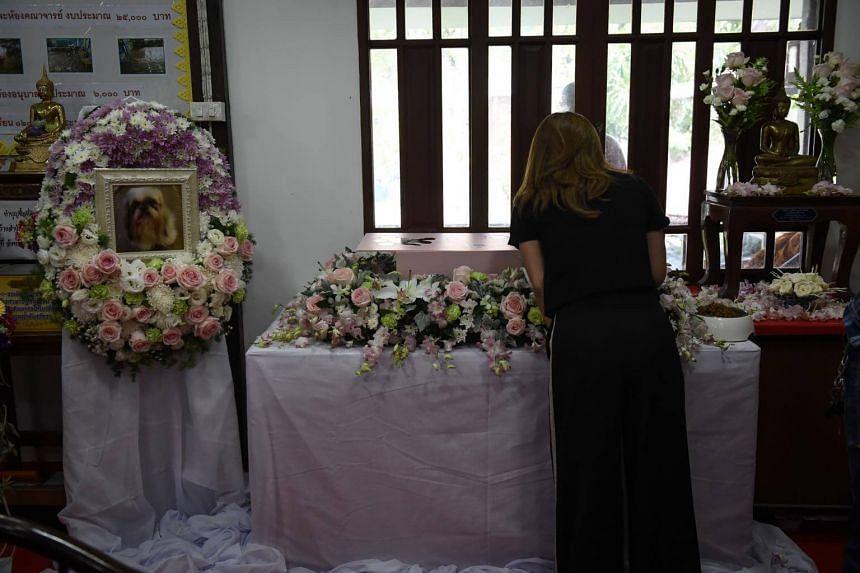 Pimrachaya Worakijmanotham saying goodbye to Dollar during the pet's funeral at Wat Krathum Suea Pla Buddhist temple in Bangkok.