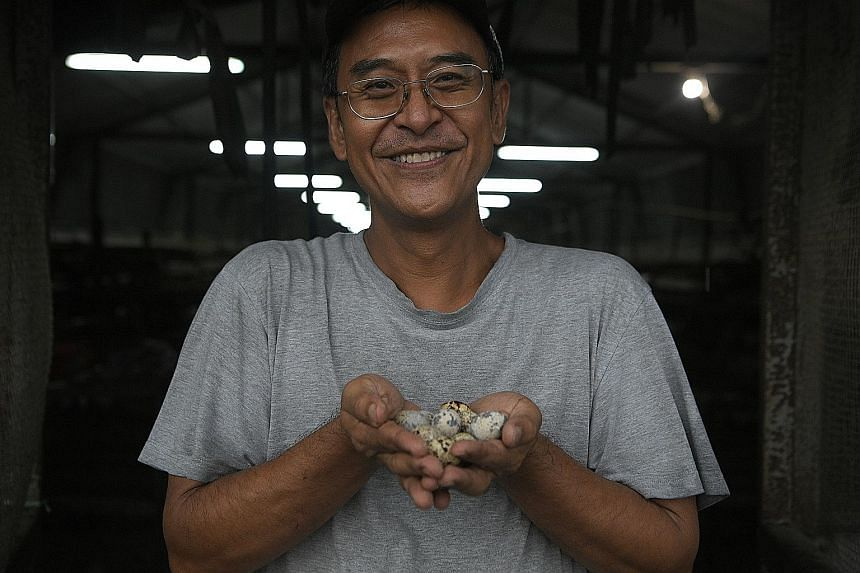 Mr William Ho, owner of Lian Wah Hang Farm in Lim Chu Kang, says local produce is more likely to be antibiotic-free than imported produce. Quails being fed at Lian Wah Hang Farm. Maintaining a clean environment has also helped farmers in Singapore to