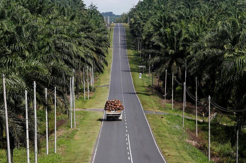 Oil palm fruits being transported through Felda Sahabat plantation in Lahad Datu in Malaysia's state of Sabah on Borneo island. Palm oil prices for the rest of this year are forecast to remain firm, given the seasonally strong fourth quarter, said Bl