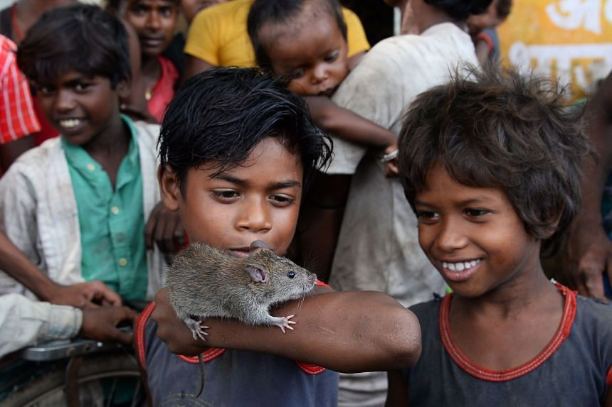 This photograph taken on August 18, 2017 shows boys of the Musahar community playing with a rat at Alampur Gonpura village in the eastern Indian state of Bihar.
