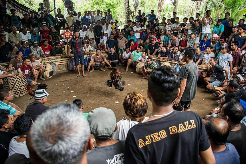 A crowd gathering at a clandestine site where birds battle each other, usually to the death, in a gory spectacle known as tajen that meshes bloodsport with ancient Balinese Hindu traditions.