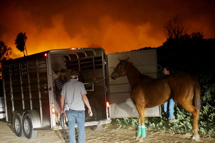 Volunteers rescue horses at a stable during the Lilac fire in Bonsall, California on Dec 7, 2017.