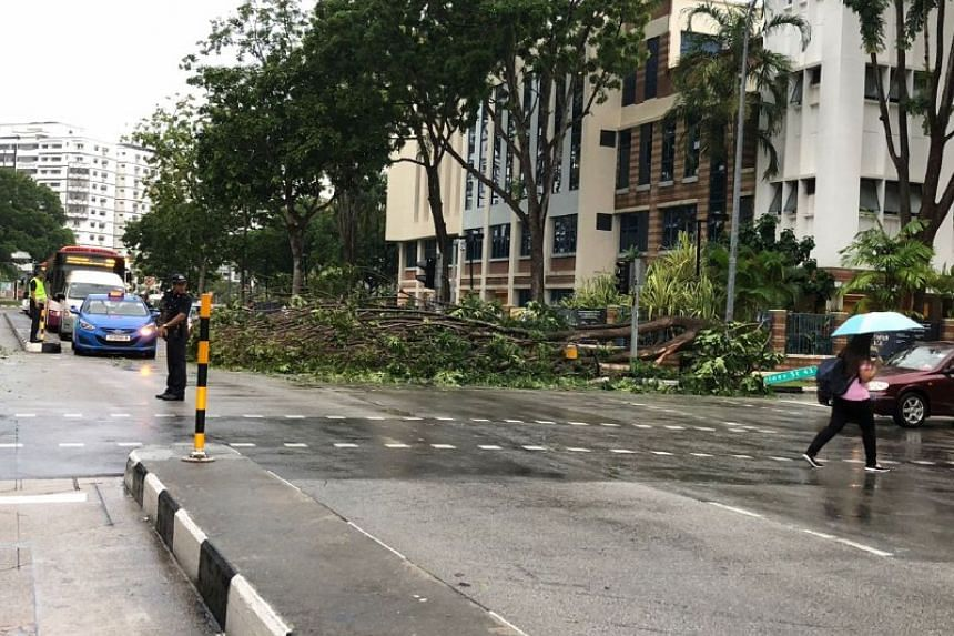The tree fell at a junction along Tampines Avenue 9 on Dec 11, 2017.