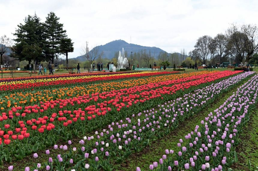 The Tulip Garden, claimed to be Asia's largest, in Srinagar. Exotic tulips were once the ultimate luxury accessory and status symbol for rich and poor alike at the beginning of the 17th century.