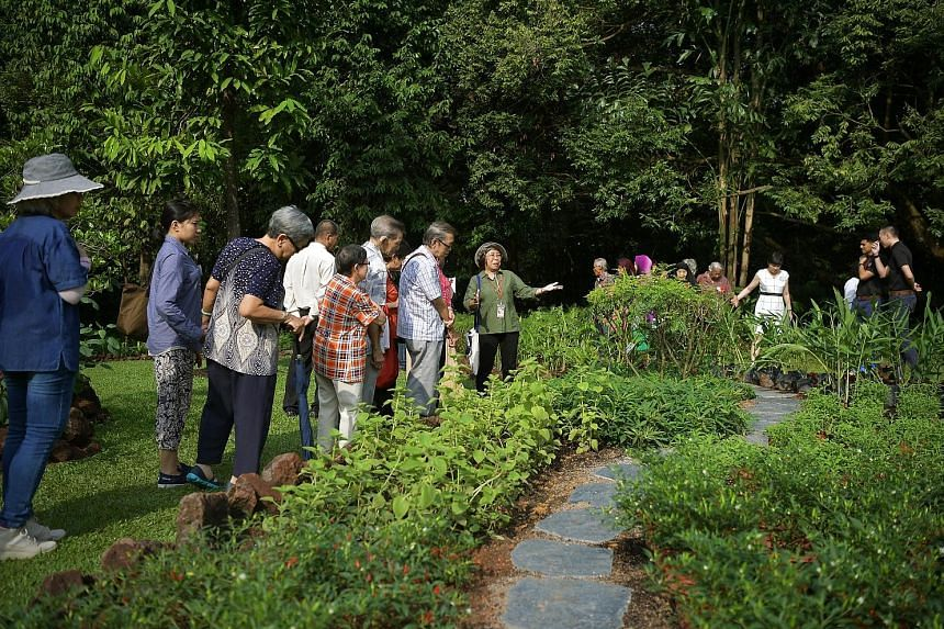 NParks nature guide volunteer Kwan Sau Kuen (in green), 64, sharing her knowledge of spices with President's Challenge beneficiaries from the Yong-en Care Centre for the elderly during a garden tour of the Istana.
