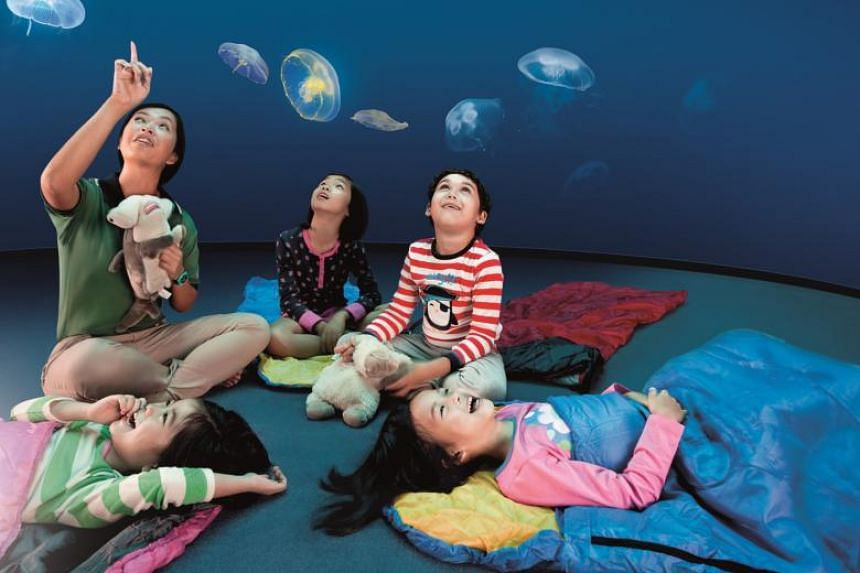Some lucky readers of The Straits Times can soon get to camp out for the night with manta rays, leopard sharks and other fish.