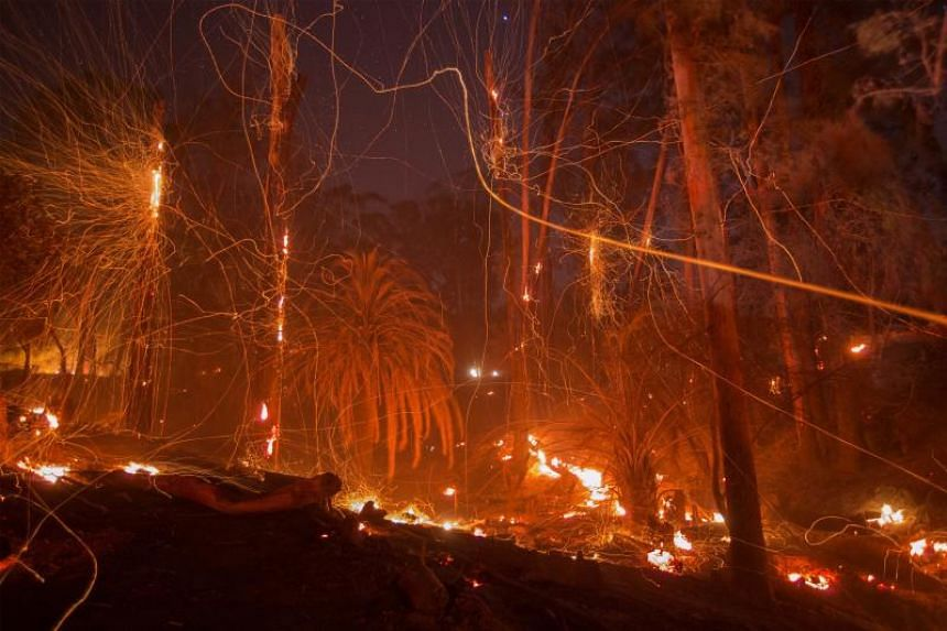 A strong wind blows embers from smoldering trees at the Thomas Fire on Dec 16, 2017, in Montecito, California.