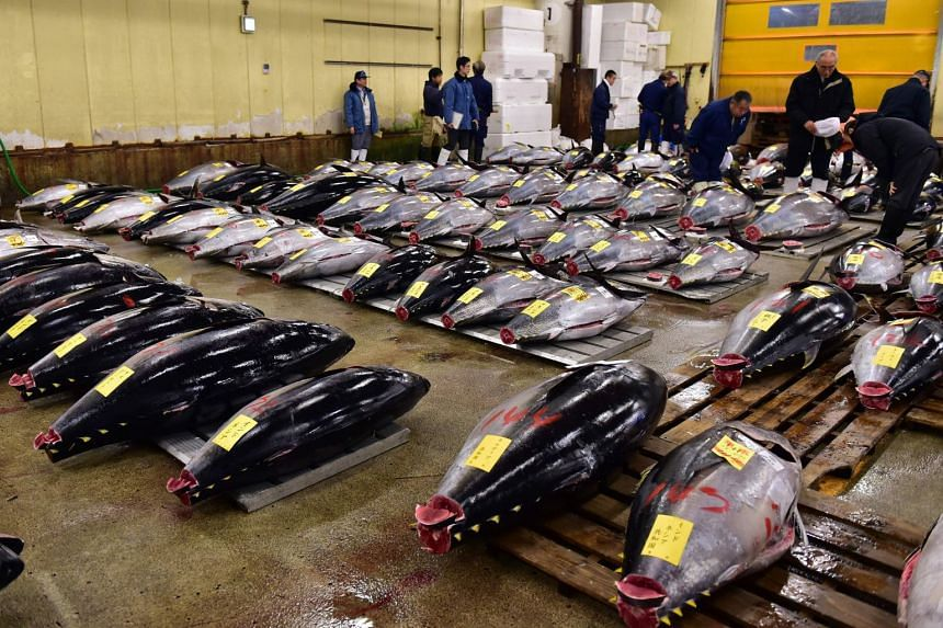 Fishmongers inspecting bluefin tuna before the first auction of 2016  at Tokyo's Tsukiji fish market. The popular market will soon move to Toyosu.
