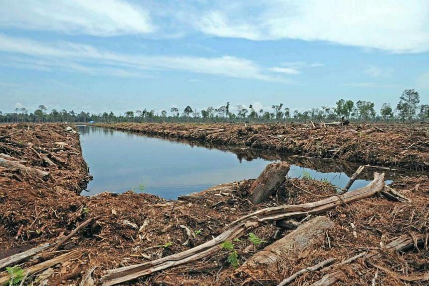 The dispute between PT Riau Andalan Pulp and Paper and the Ministry of Environment and Forestry involved differences over government efforts to speed up the pace at which plantation companies shift off flammable peatlands.