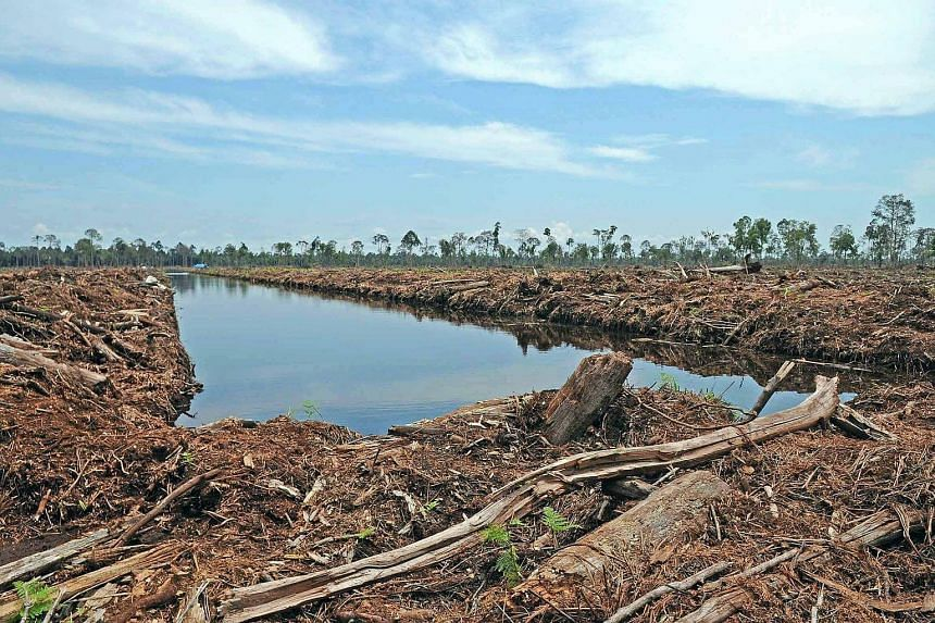 A canal allegedly being built on peatland in the concession licensed to Riau Andalan Pulp and Paper.
