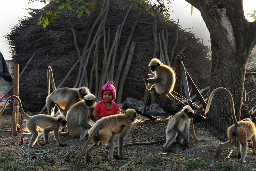 Samarth Bangari's unusual friendship was discovered when the youngster was spotted alone in his village in southern India playing with nearly two dozen gary langurs.
