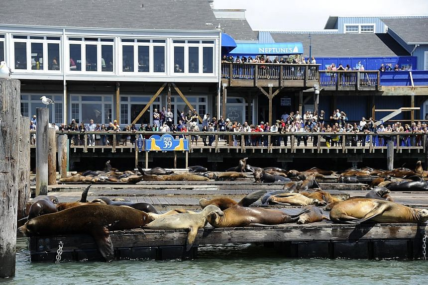 """Everitt Aaron Jameson, 26, had intended to target San Francisco's busy Pier 39 - which gets around 10 million visitors a year - because he """"knew it was a heavily crowded area"""". His plan involved the use of explosives that could """"tunnel"""" or """"funnel"""" p"""