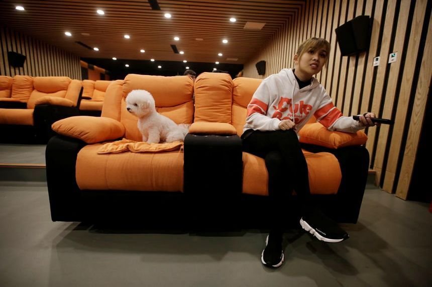 A pet dog sits in a sofa next to a staff member as they wait to watch a movie in a cinema for dogs at Cute Beast Pet Resort in Beijing.
