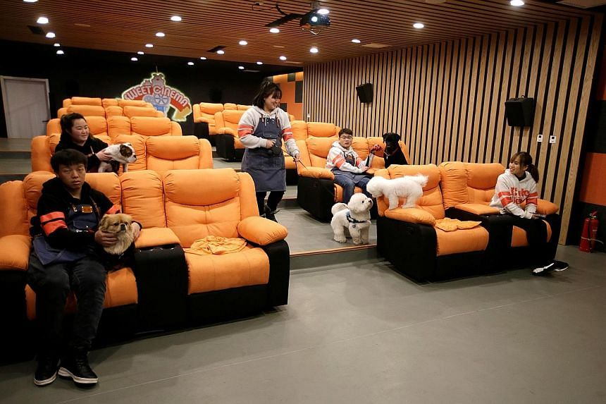 Staff of Cute Beast Pet Resort in Beijing and their pets settling down to watch a movie in a cinema for dogs. The pet products boom in China has stoked imports and boosted local business.