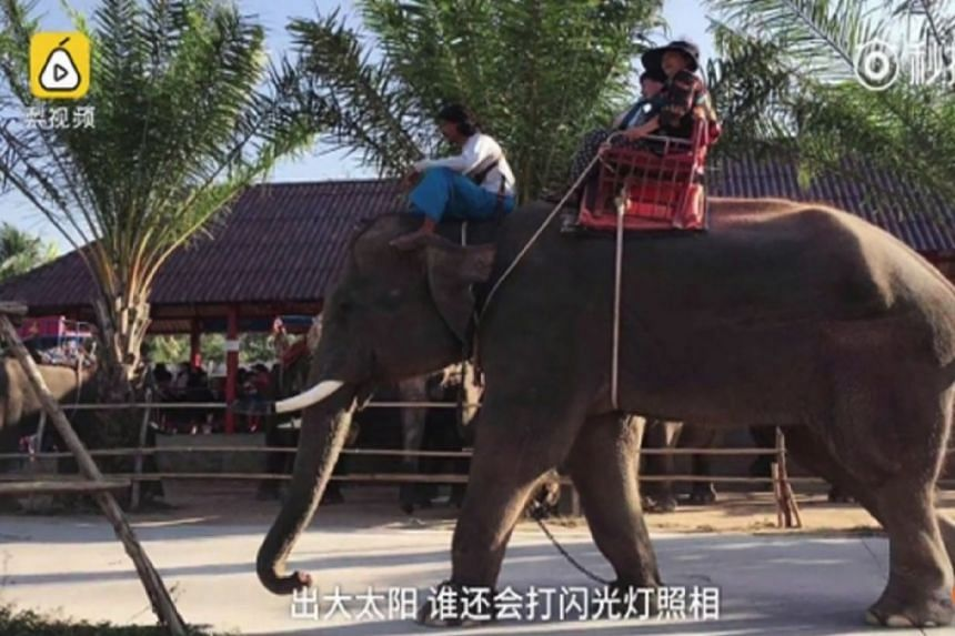 A 35-year-old Chinese tour guide was killed by a bull elephant that attacked a group of tourists in Thailand.