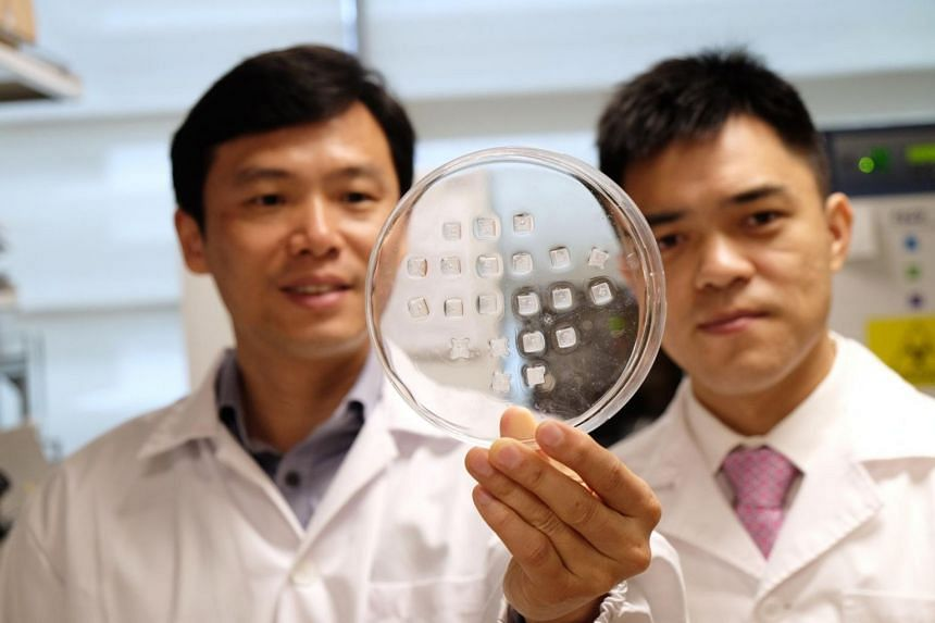 Professor Chen Peng (left) and Assistant Professor Xu Chenjie holding a skin patch that allows anti-obesity medication to be delivered directly to the fat under the skin.
