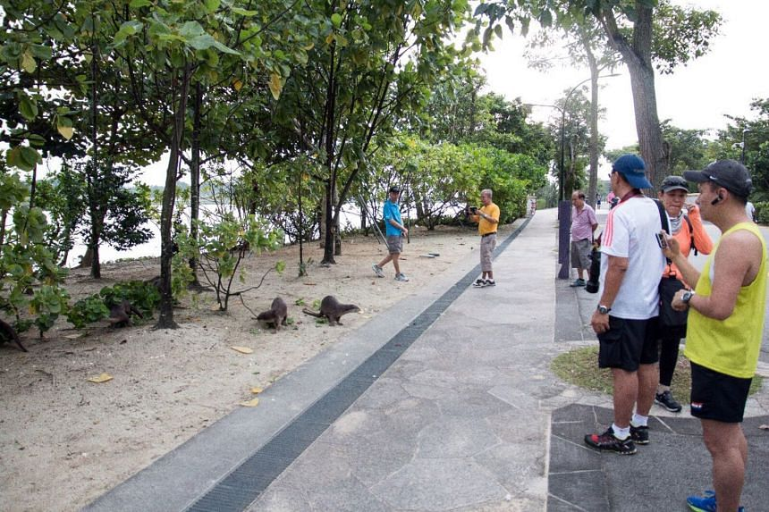 Members of the public observing otters at Gardens by the Bay on Dec 30. A five-year-old girl was taken to hospital on the same day after she was bitten by an otter near Satay by the Bay.